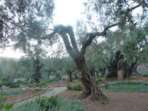 The Garden of Olives